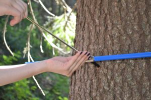 esantionare arbori cu burghiul Pressler - extragerea carotei - Parang